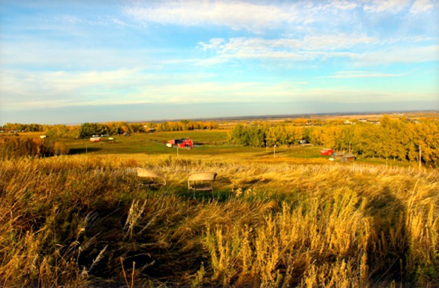 Dewinton Country Kennel Calgary Amp Okotoks Dog Kennel